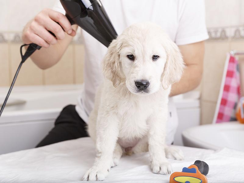toelettatura cani la spezia | red e toby